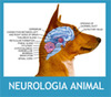 Neurología Animal